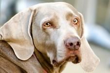 dog-1362222090IV1